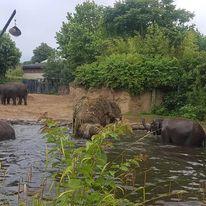 hippos at dublin zoo